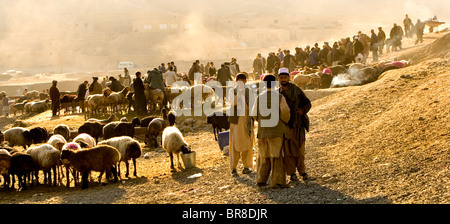 Sheep are for sale in a dusty landscape at a livestock market near Kabul. - Stock Photo