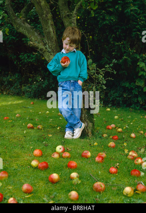 YOUNG BOY UNDER APPLE TREE WITH WIND FALLS - Stock Photo