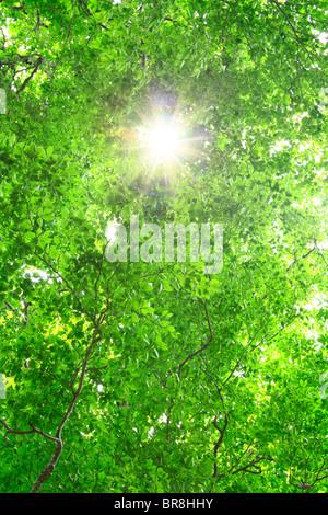 Sunbeam between green trees - Stock Photo