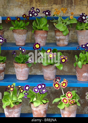 The Auricula Theatre at Calke Abbey, Derbyshire, UK - Stock Photo