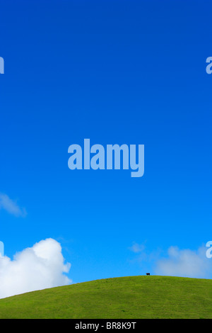 Blue Sky and A Cow on Hilltop, Hawaii, USA - Stock Photo