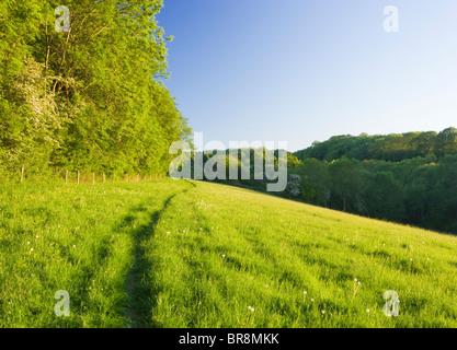 Path through field, North Downs at Ranmore, near Dorking, Surrey, UK - Stock Photo