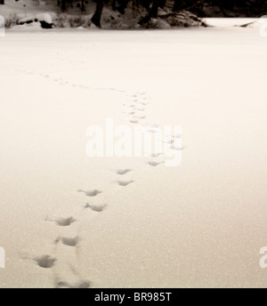 Deer tracks in the snow on a frozen lake. - Stock Photo