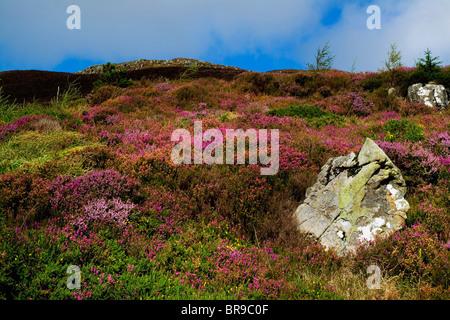 Slieve Gullion, Co. Armagh, Ireland - Stock Photo