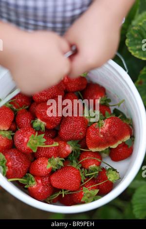 Little girl holding bucket full of strawberries - Stock Photo