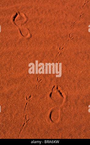 Tracks and footprints, outback Australia - Stock Photo