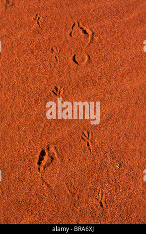 tracks and footprints, South Australia - Stock Photo