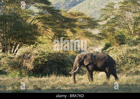 ELEPHANT LAKE MANYARA NATIONAL PARK TANZANIA AFRICA - Stock Photo