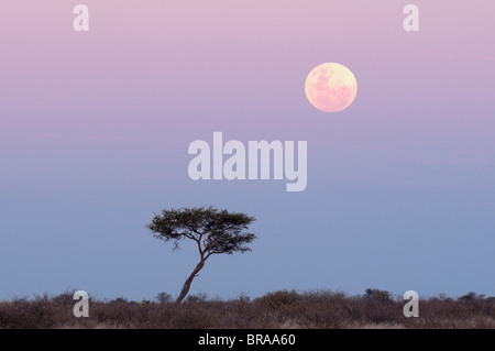 Moonrise, Deception Valley, Central Kalahari Game Reserve, Botswana, Africa - Stock Photo