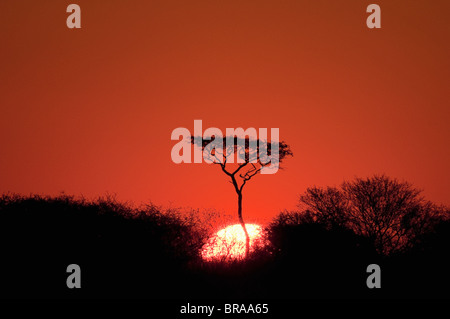 Sunset, Deception Valley, Central Kalahari Game Reserve, Botswana, Sgtivs - Stock Photo