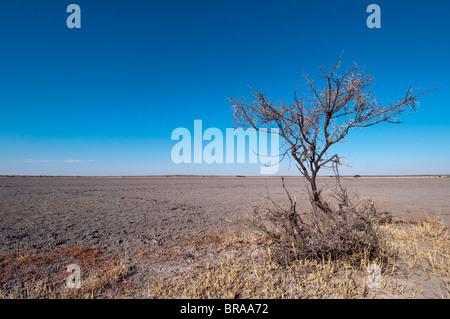 Deception Valley, Central Kalahari Game Reserve, Botswana, Africa - Stock Photo