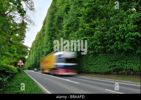 The Meikleour Beech Hedge (Fagus sylvatica), the tallest and longest hedge on earth, Scotland, UK - Stock Photo