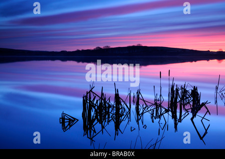Lower Tamar Lake and silhouetted bulrushes (Typha sp.) at sunrise, Devon / Cornwall border, UK - Stock Photo