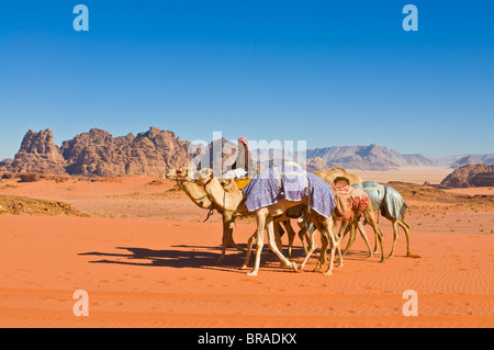 Camel caravan in the stunning desert scenery of Wadi Rum, Jordan, Middle East - Stock Photo