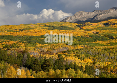 Fall colors, Gunnison National Forest, Colorado, United States of America, North America - Stock Photo