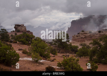 Fog emerging from a vast canyon behind rock formations and juniper trees at Shafer Canyon overlook in Canyonlands - Stock Photo