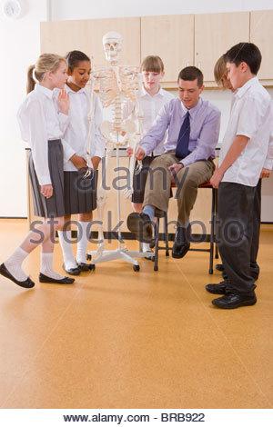 School children listening to biology teacher explain human skeleton - Stock Photo