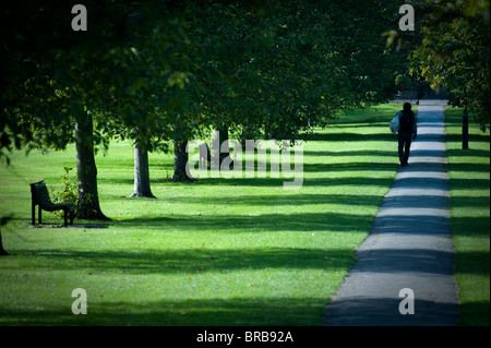 Man walks down line of Autumn Trees on Jesus Green Cambridge in lovely side light casting shadows. - Stock Photo