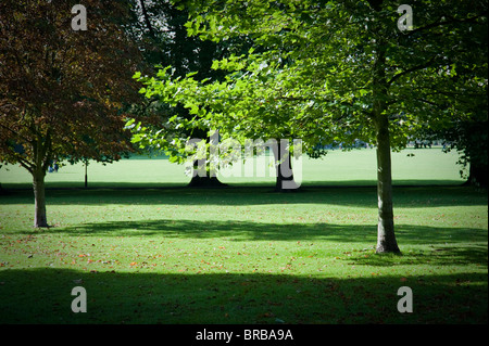 Autumn Trees on Jesus Green Cambridge in lovely side light casting shadows. - Stock Photo