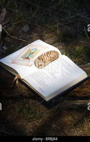 Bible with pine cone, Haute Savoie, France - Stock Photo