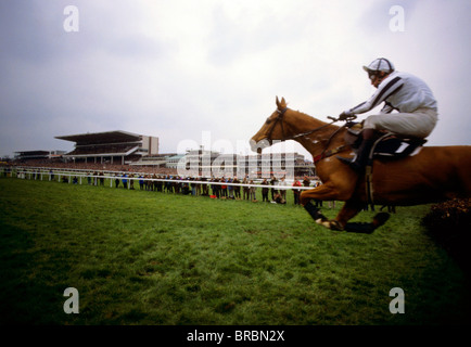 Horse and jockey takes jump at steeplechase race - Stock Photo