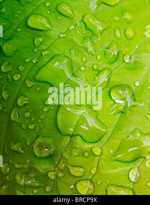 green leaf covered with rain drops - Stock Photo