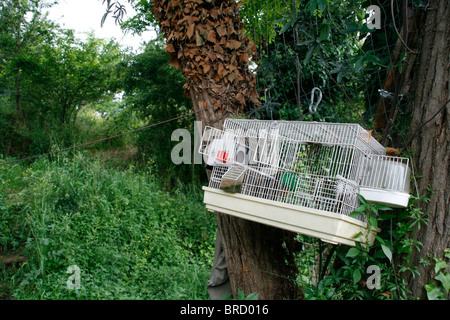 one bird cage on tree in woods in countryside - Stock Photo