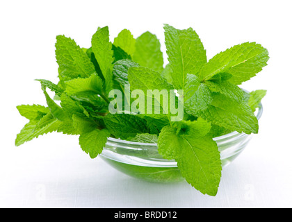 Bunch of fresh mint sprigs in clear glass bowl - Stock Photo