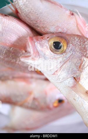 Animal closeup details eye fish jaw macro marine mouth for Nearest fresh fish market
