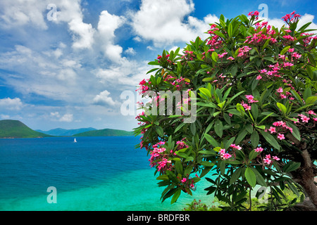 Plumeria in bloom and small sailboat off St. John Island. US Virgin Islands. Virgin Islands National Park. - Stock Photo