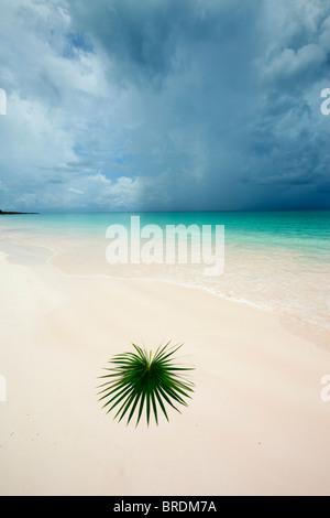 palm leaf on deserted beach - Stock Photo