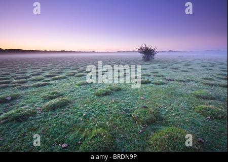 Misty dawn at Balmer Lawn near Brockenhurst, New Forest, Hampshire, England, UK - Stock Photo