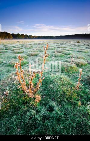 Sunrise at Balmer Lawn near Brockenhurst, New Forest, Hampshire, England, UK - Stock Photo