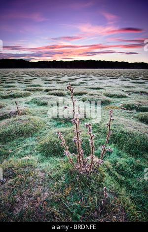 Spectacular dawn at Balmer Lawn near Brockenhurst, New Forest, Hampshire, England, UK - Stock Photo