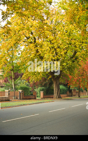 Autumnal tree lined avenue in Royal Leamington Spa, Royal Leamington Spa, Warwickshire, England, UK - Stock Photo