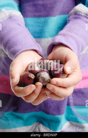 Little child holding flower bulbs (scilla siberica) - Stock Photo