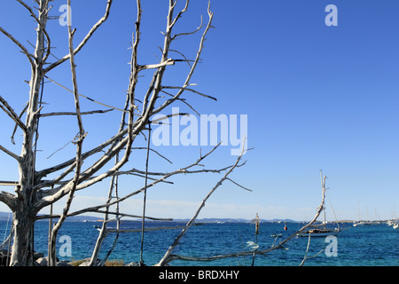 Mediterranean blue sea dried tree branches foreground - Stock Photo
