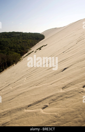 Pine forest at the dune of Pyla, Dune du Pilat, biggest dune in Europe on the Atlantic coast near Arcachon, Departement - Stock Photo