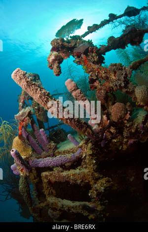Underwater wreck of the ship Price Albert off the Coast of Roatan - Stock Photo