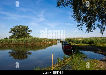 Nature Reserve, Rhine River Delta, Fussach, Bregenz, Vorarlberg, Austria, Europe - Stock Photo