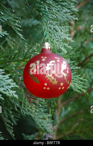 Red christmas bauble hanging in an authentic christmas tree - Stock Photo