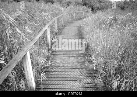 Boardwalk path through River Teifi Marshes nature reserve, pembrokeshire, wales, united kingdom - Stock Photo