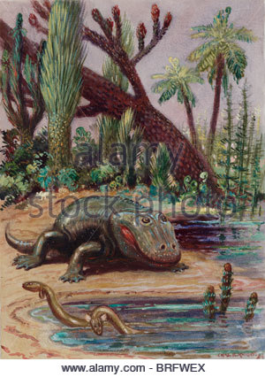Eryops were the highest type of life during the Carboniferous Period. - Stock Photo