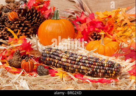 An Autumn holiday theme with pumpkins, corn, pine cones and autumn leaves on a hay base with focus on the corn cob. - Stock Photo