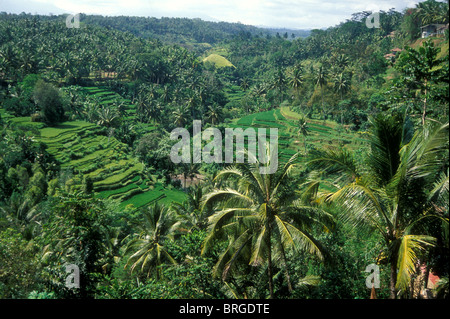Tropical scene near Ubud in central Bali with palm trees and rice terraces - Stock Photo
