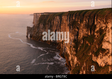 the soft glow of the early morning sun illuminates the cliffs of bempton, yorkshire, england - Stock Photo