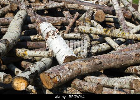 Pile of Cut Wood Logs - Stock Photo