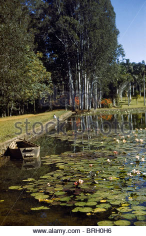 A man sits beside a water lily pond in a eucalyptus forest. - Stock Photo