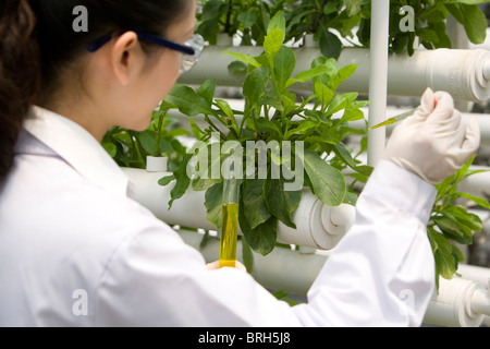 Scientists doing research in modern farm - Stock Photo