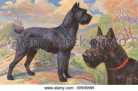 Portrait of Giant Schnauzers standing on rocky outcrop near castle. - Stock Photo